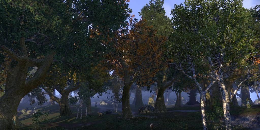 A screenshot of the Glenumbra forest (Elder Scrolls Online)